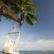 Swing on palm tree — Stock Photo