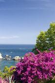 Coastal scene with flowers sicily — Stock Photo