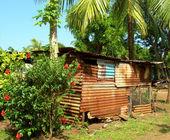 Maison natale avec fleurs cocotier dans jungle maïs île nic — Photo
