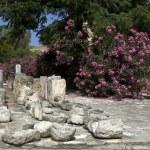 Historic limassol castle lemesos cyprus — Stock Photo #13084333