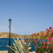 Flowers Mediterranean sea harbor Ios Greek islands — Stock Photo