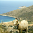 Sheep horns mountain over AgiTheodoti beach Ios cyclades greece — Stock Photo #13086455