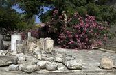 Historic limassol castle lemesos cyprus — Stok fotoğraf
