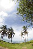 Corn island north end beach fish-eye — ストック写真