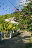 Luxury house on road with flowers bequia — Stock Photo