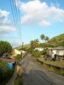 Maison natale de scène de rue typique bequia sur route avec cocotier — Photo