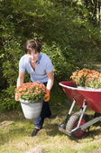 žena středního věku vedoucí zahradník výsadby maminek v zahradě — Stock fotografie