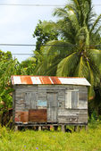 Ramshackle zinc clapboard house jungle Corn Island Nicaragua — Stock Photo
