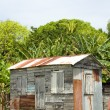 Ramshackle zinc clapboard house jungle Corn Island Nicaragua — Stock Photo #13413156