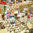 Stock Photo: Flower bulb plant store display in flower market amsterdam