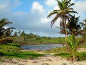 Fresh water swamp big corn island nicaragua — Stock Photo