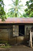 House in jungle Big Corn Island Nicaragua — Stock Photo