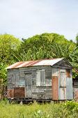 Ramshackle zinc clapboard house jungle Corn Island Nicaragua — Stock Photo