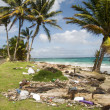 Sallie peachie beach on the malecon highway rural corn island nicaragua caribbean sea with litter and garbage - 图库照片
