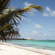 Beach palm tree San Luis  Andres Island Colombia South America — Stock Photo