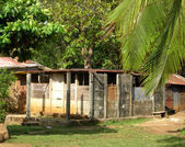 Maïs construction maison natale island nicaragua — Photo