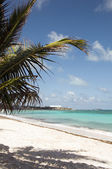 Beach palm tree san luis andres adası kolombiya güney amerika — Stok fotoğraf