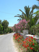 Greek island street scene with flowers — Стоковое фото