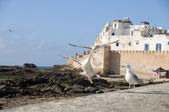Ramparts old city essaouira morocco — Stock Photo