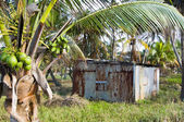 Typical house corn island nicaragua — Stock Photo