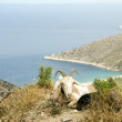 Sheep  horns  mountain over Agia Theodoti beach Ios cyclades greece - Foto Stock