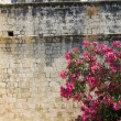 Limassol castle with flowering plant Cyprus — Stock Photo