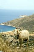 Sheep horns mountain over Agia Theodoti beach Ios cyclades greece — Stock Photo