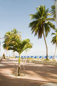 Waterfront promenade plage palmiers san andres island colombie — Photo
