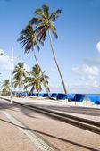 ウォーター フロント プロムナード ビーチ椰子サン アンドレス コロンビアの島 — ストック写真