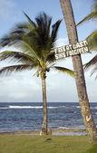 Sign palm tree Corn Island Nicaragua — Stock Photo