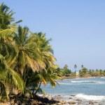 Landscape seascape palm coconut trees Caribbean Sea — Stock Photo #26987911