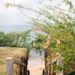 Stairway entry to sandy beach  flowers Caribbean Sea — Stock Photo