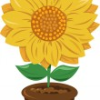Sunflower in a Pot — Stock Vector