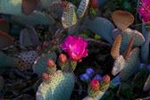Cactus flower — Foto de Stock