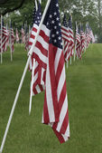 Cemetery with the US Flags — Stock Photo
