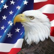 Bald Eagle portrait with USA flag Background — Stock Photo