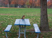 Squirrel eating a piece of bread on picnic table in a fall day — Zdjęcie stockowe
