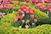 Beautiful Garden with Pretty Pink Tulip Flowers — Stock Photo