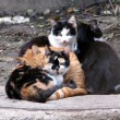 Foto Stock: Homeless cats