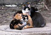 Homeless cats — Stock Photo