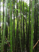 Bamboo forest — Foto Stock