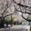 Kids walking under cherry blossoms trees in Japan — Stock Photo