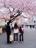 Japanese family enjoying cherry blossoms — Stock Photo