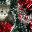 Kitty covered by tinsel — Stock Photo
