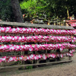 Heart shaped emplaques ( wish plaques ) at shrine in Kyoto, Japan — Stock Photo #21306329