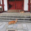 Protected deers in Nara, Japan — Stock Photo