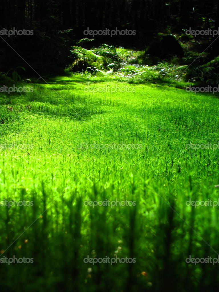 Фотообои Mossy forest floor with beautiuful sunlight falling in the middle