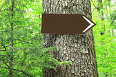 Blank direction sign on tree — Stock Photo