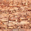 Rotting wood — Stock Photo