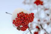 Salvatrices sous la neige — Photo
